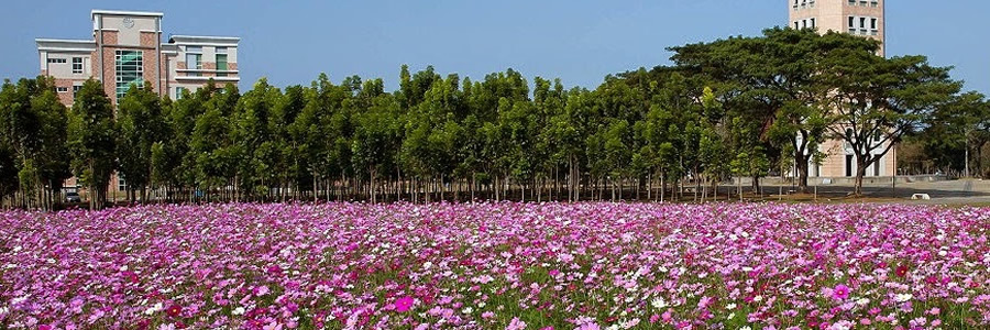The Cosmos Flower Fields at TransWorld University